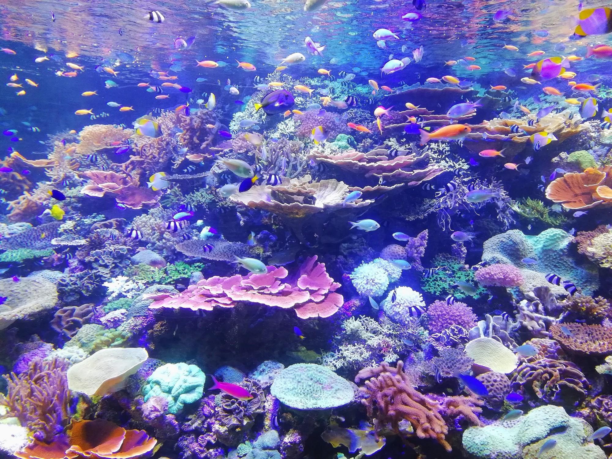 fish Aquarium Mastering